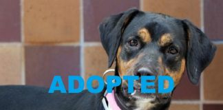 Meet Lilu NSALA's latest adoptable dog ready for a great home 2016 images