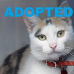 ADOPTED: Meet Pepper Jack NSALA's latest adoptable cat