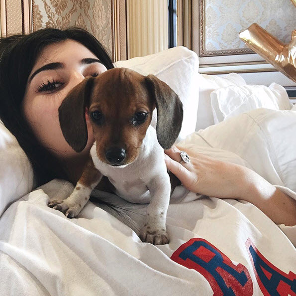 kylie jenner birthday dog