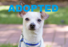 meet emory nsalas latest rescue dog ready for a great home 2016 images