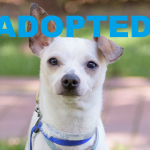 ADOPTED: Meet Emory, NSALA's latest rescue dog