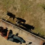 nick bit by dogs on fear the walking dead grotesque