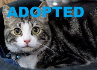 CONNOR ADOPTED RESCUE PET