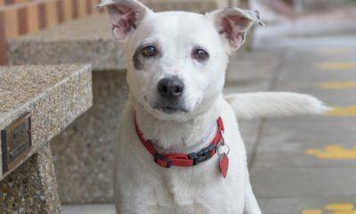 allie rescue adoption dog movie tv tech geeks