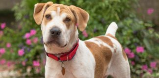 Meet Mahoney, NSALAs latest rescue dog ready for a good home 2016 images