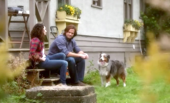 supernatural sam and amelia richardson dog