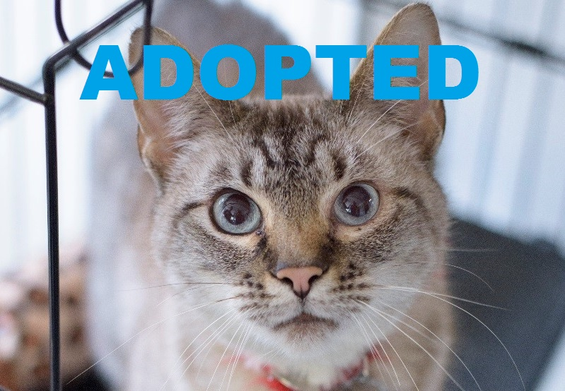 NEFERTITI got adopted