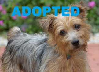 TOBY HAS BEEN ADOPTED