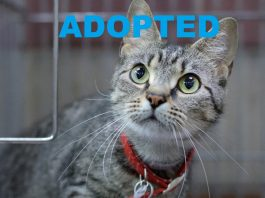 ZOEY had been adopted