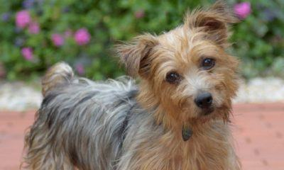 meet toby nsalas rescue dog of the week needing a good home 2016 images