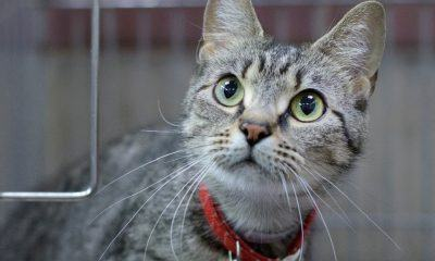 meet zoey nsalas rescue cate of the week needing a good home 2016 images