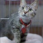 zoey rescue cat adoption movie tv tech geeks