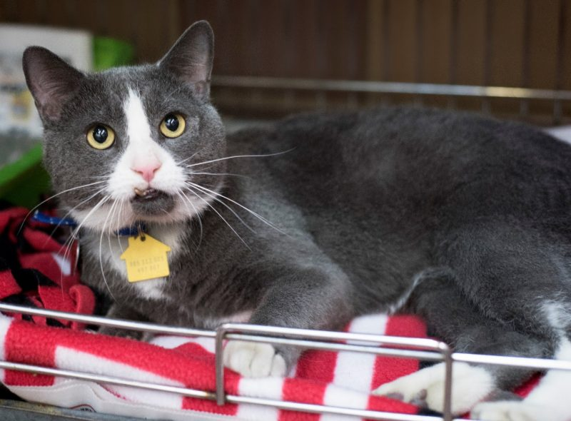 gopher rescue cat from movie tv tech geeks north shore animal league