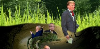 is donald trump really draining the swamp or dipping his toe in 2016 images