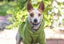 meet ciera nsalas rescue dog of the week needing a good home 2016 images