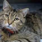 Meet Twiskers, NSALAs rescue cat of the week