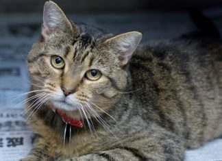 meet twiskers nsalas rescue cat of the week 2016 images