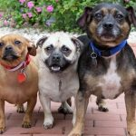 this adorable rescue threesome needs a great home 2016 images