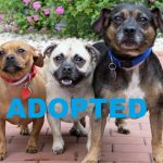 This adorable rescue threesome needs a great home