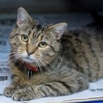 twiskers rescue cat movie tv tech geeks