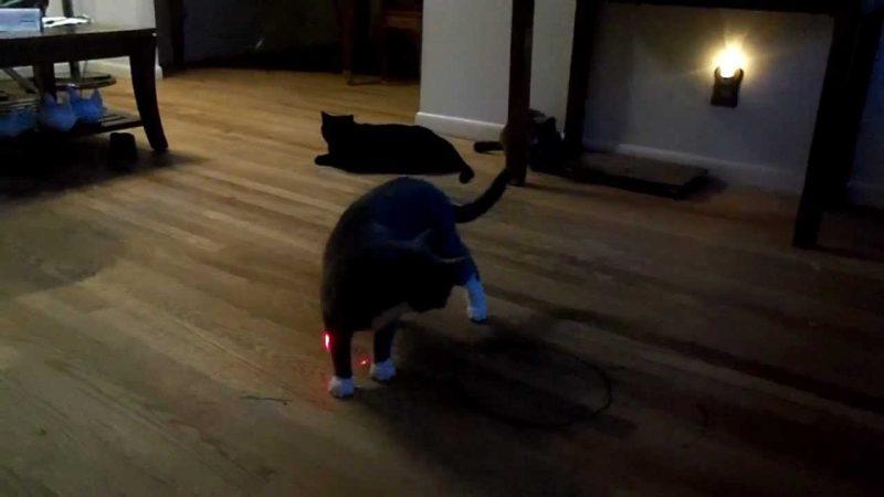 FroliCat BOLT Interactive Laser
