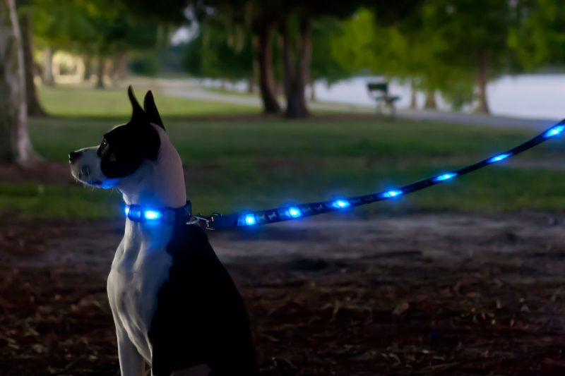 Illuminated Dog Leash