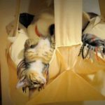 The Original Cat's Trapeze