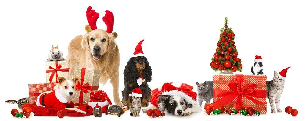 Top 10 Gifts for Your Pets 2016 images