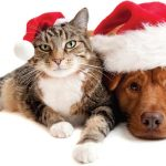 Top 7 Essential Holiday Pet Tips