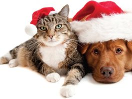 Top 7 Essential Holiday Pet Tips 2016 images