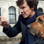 benedict cumberbatch sherlock holmes dog season 4