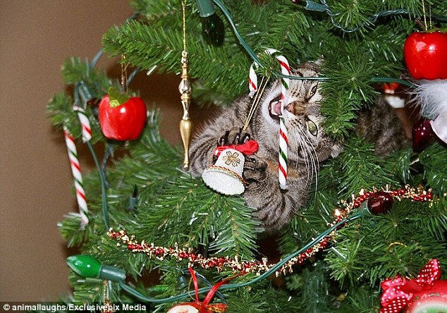 cat eating candy cane