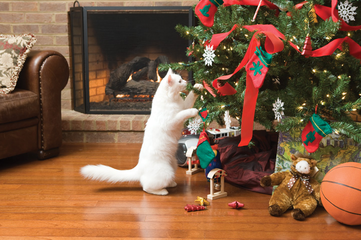 cat eating holiday tree