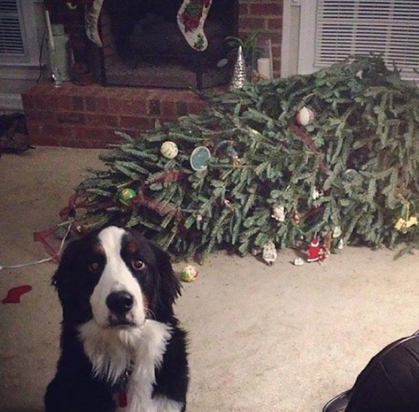 christmas tree knocked over from pet