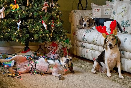 dogs in christmas lights