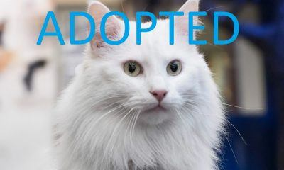 king henry adopted rescue cats movie tv tech geeks