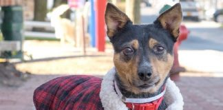 make sophias holiday bright by adopting her 2016 images