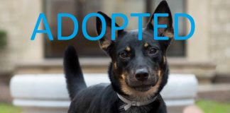 DIXIE rescue dog adopted movie tv tech geeks