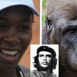 doug adler said serena williams was guerrilla not gorilla