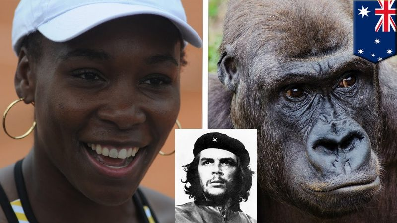 doug adler said serena williams was guerrilla not gorilla