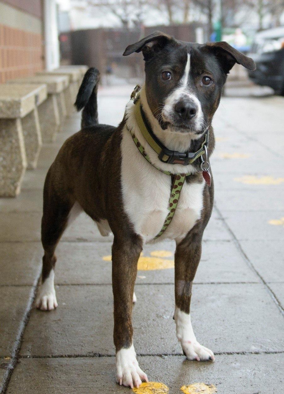 king rescue me adoption dog movie tv tech geeks