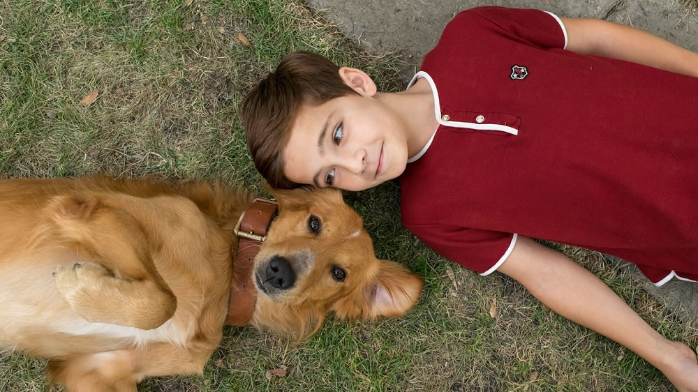 split tops box office while a dogs purpose overcomes peta 2017 images