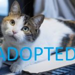 Meet Maddie, rescue cat ready to be adopted at NSALA