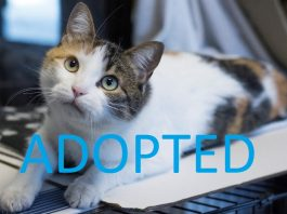 RESCUE cat maddie adopted