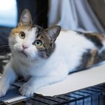 maddie rescue cat to adopt nsala