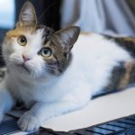 meet maddie rescue cat ready to be adopted at nsala 2017 images
