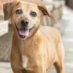 Meet Nala, featured rescue dog ready to be adopted at NSALA