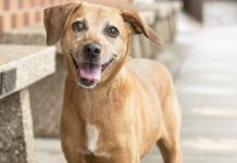 meet nala featured rescue dog ready to be adopted at nsala 2017 images