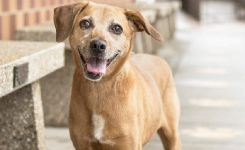 Meet Nala, featured rescue dog ready to be adopted at NSALA 2017 images