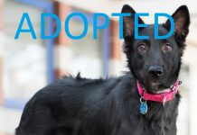rescue dog monty adoptated nsala movie tv tech geeks